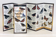 Common Butterflies of New England
