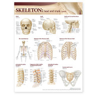 Skeletal System, Head and Trunk Anatomy Chart