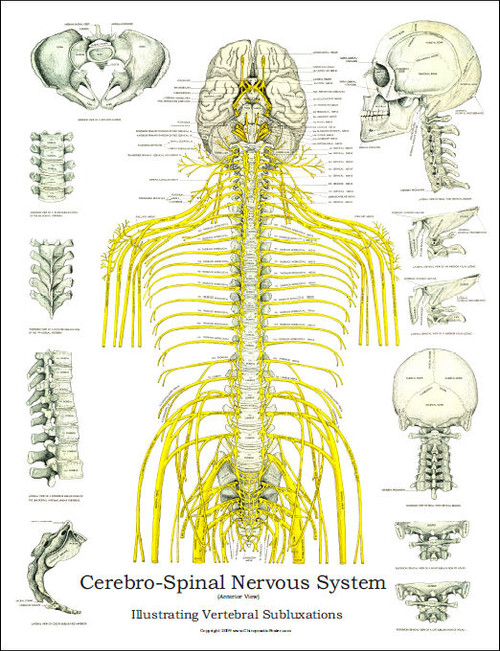 Spinal Nerves and Subluxation Poster - Clinical Charts and Supplies