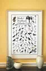Birds of the Southeast Atlantic Coast Poster