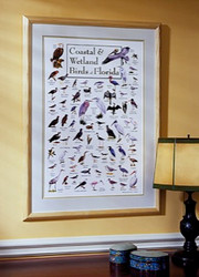 Coastal & Wetland Birds of Florida Poster