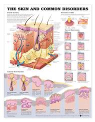 Common Disorders and Skin Anatomy Chart