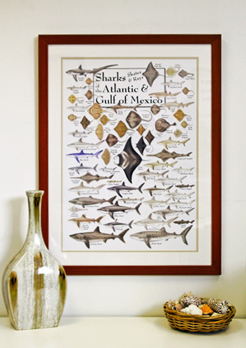 Sharks,Rays and Skates Poster