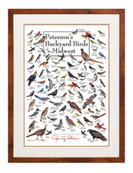 Peterson's Backyard Birds of the Midwest Poster