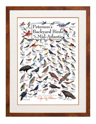 Peterson's Backyard Birds of the Mid-Atlantic Poster