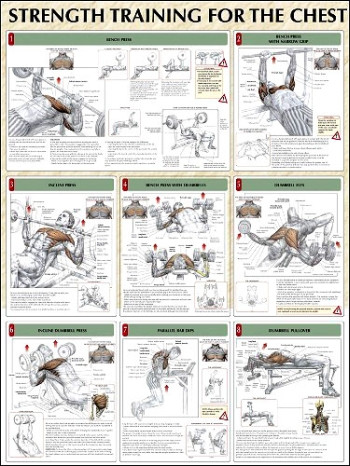 Strength Training For The Chest Poster Clinical Charts And Supplies