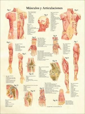 Cuerpo humano del anatomia pdf