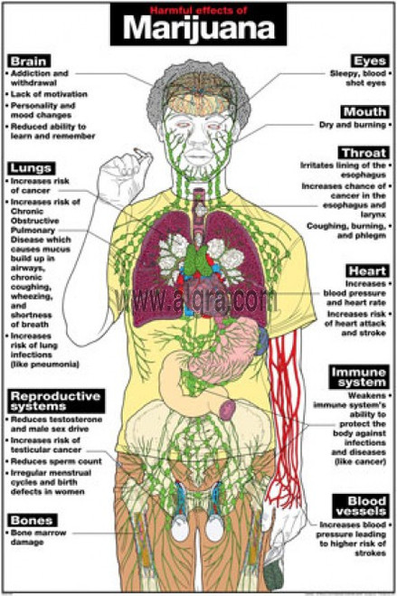 Harmful Effects of Marijuana Poster - Clinical Charts and Supplies