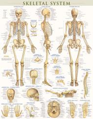 Skeleton System Poster