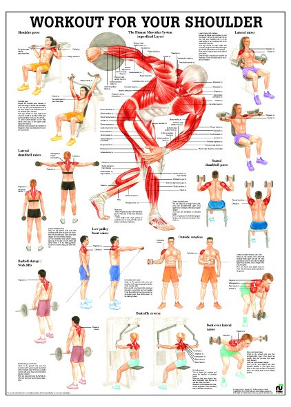 Shoulder Workout Poster Clinical Charts And Supplies
