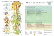 ANS and Subluxation Effects Poster