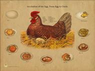 Chicken Egg Incubation Chart