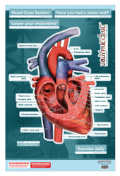 Heart Cross Section Poster