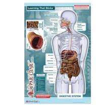 Digestive System Sticky Wall Poster