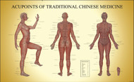 Acupoints of TCM (female) Acupuncture Chart