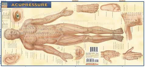 Acupuncture Charts And Acupressure Posters Clinicalcharts Com