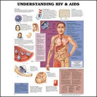 Understanding HIV & AIDS Anatomical Chart