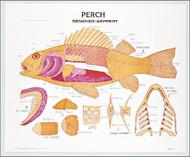 Perch Chart