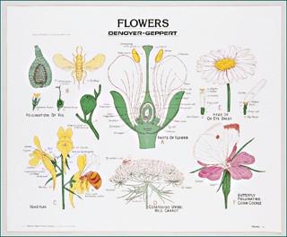 Flowers Wall Chart