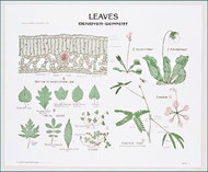 Leaves Chart