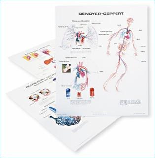 Human Body System Chart Set