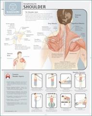 Shoulder Strengthening Exercises Poster