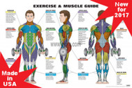 Exercise and Muscle Guide - Male- Anatomy Poster