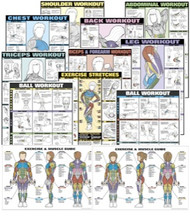 Exercise Posters Male / Female Set