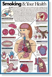 Smoking & Your Health Poster