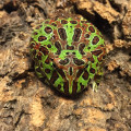 Ornate Pac Man Frog for sale