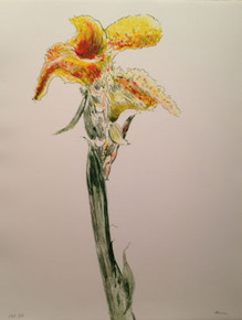 untitled (Lily)