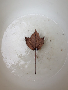 Smith, Mark L.,  Leaf 1, 2013, archival inkjet, ed. 50,  12 x 18 in., available in other sizes