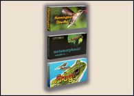 Nature Flipbook 3 Pack:  Caterpillar to Butterfly, Hummingbird, Tadpole to Frog
