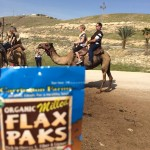 While waiting to ride a camel, Jeremy uses his flax pak.