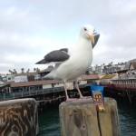 Even this bird likes Carrington Farms Flax Paks!