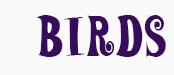 -ttg-banner-birds.png