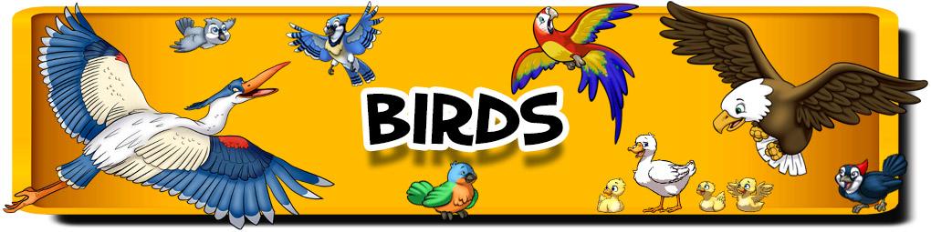 banner-birds.jpg