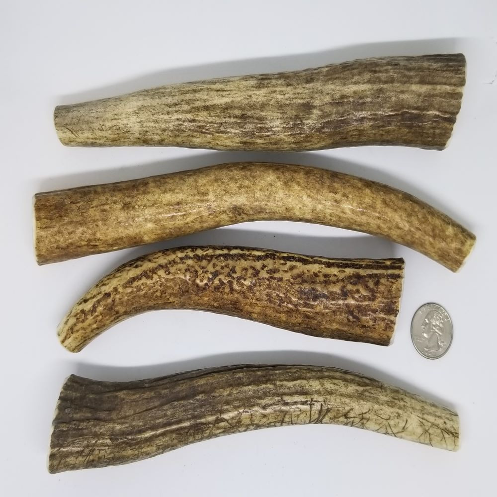 Sample of Large+ Antlers. Antler will vary from those shown.