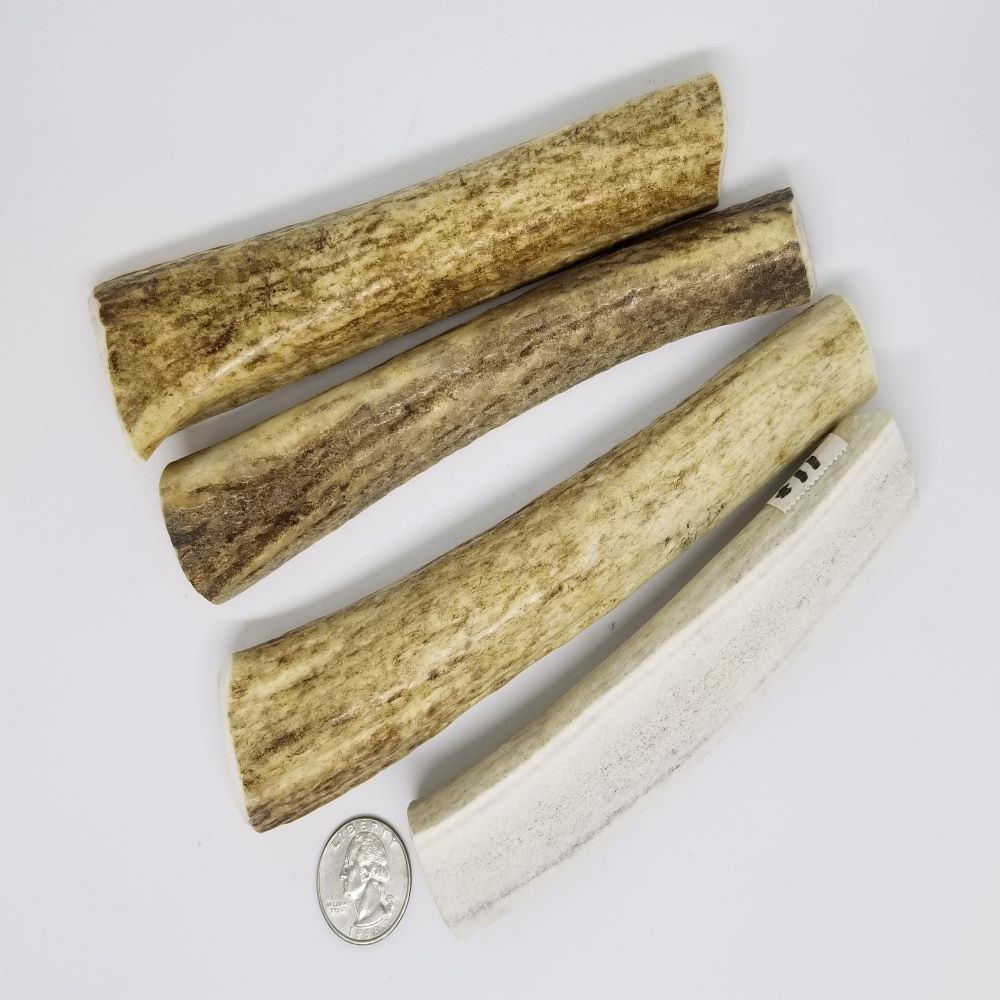 Sample of Small Split Antlers. Antler will vary from those shown.
