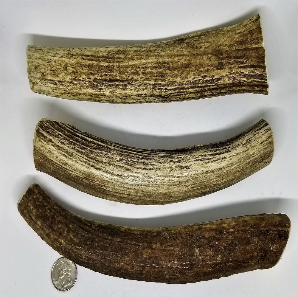 Sample of Extra-Large (Whole) Antlers. Antler will vary from those shown.