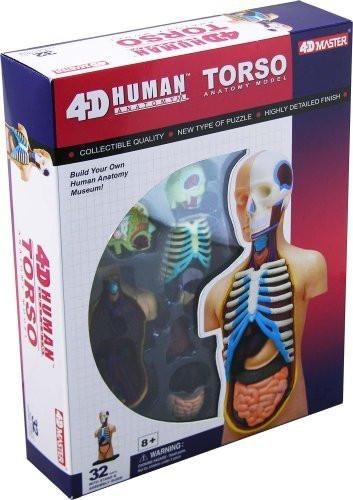 4D Vision Visible Human Torso Anatomy Model Kit - 26051