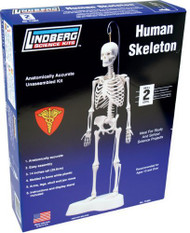 Lindberg Human Skeleton Educational Model Kit - 71304