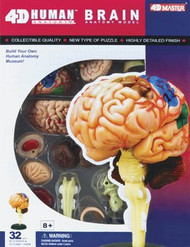 4D Vision Visible Human Brain Anatomy Model Kit - 26056