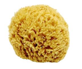 Sea Sponge L