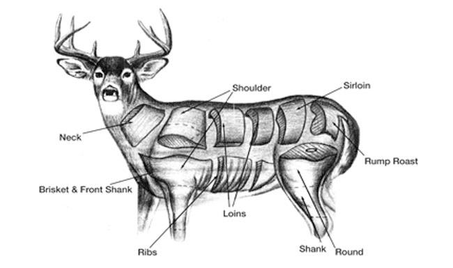 Venison Cuts of Meat