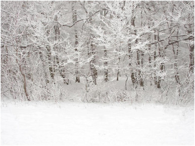 Snow scene photography backdrop