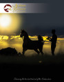 The Arabian Breeders' Magazine - European Subscription