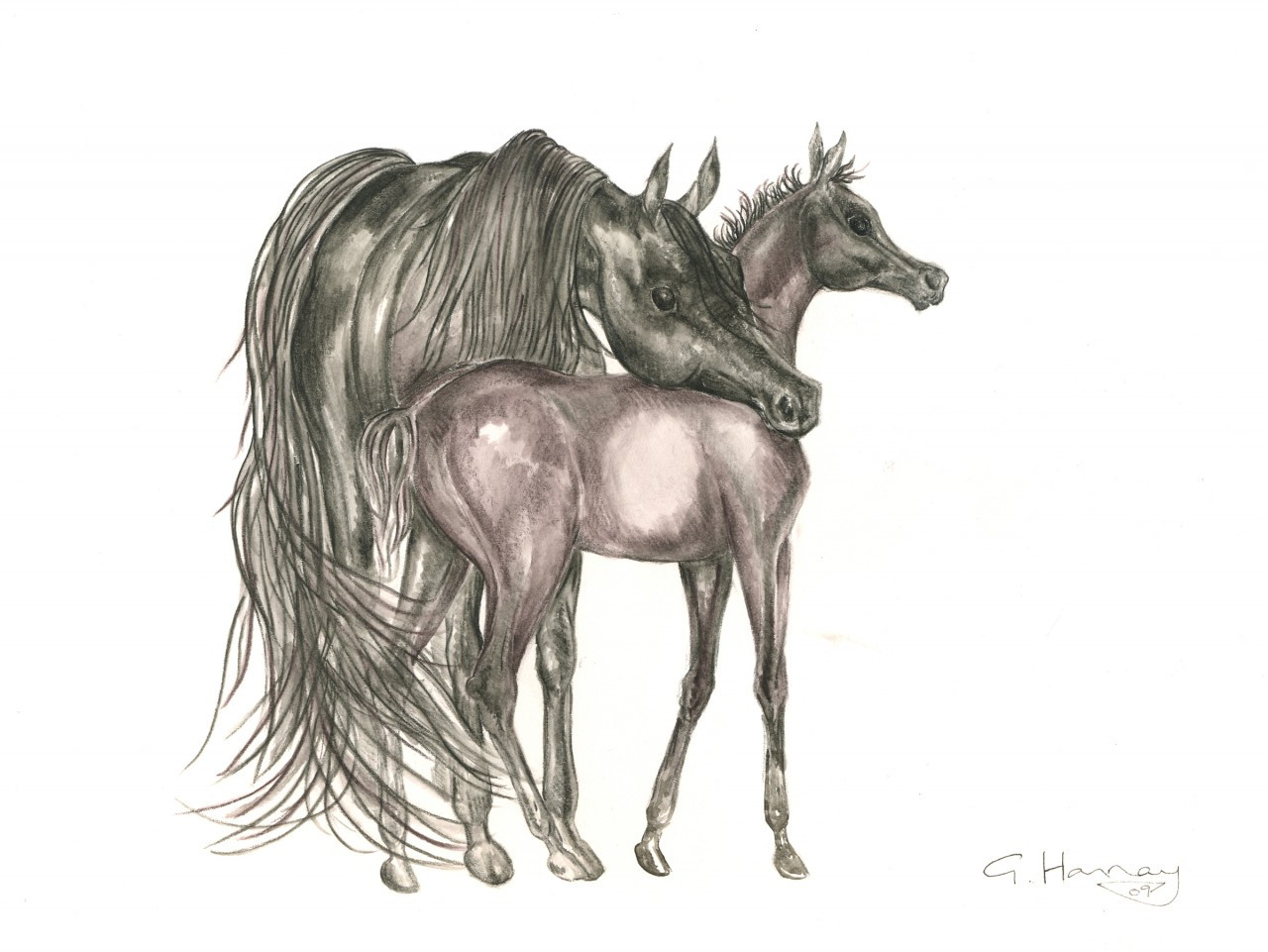 Christmas Horse Drawing.Mare Foal Christmas Card The Arabian Magazine Shop