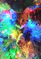 Sheeba's First Christmas - A5 card