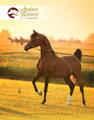 The Arabian Breeders' Magazine - Volume II Issue IV